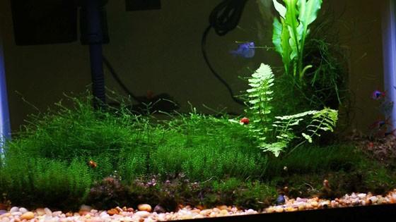 Дизайн аквариумов фото 8
