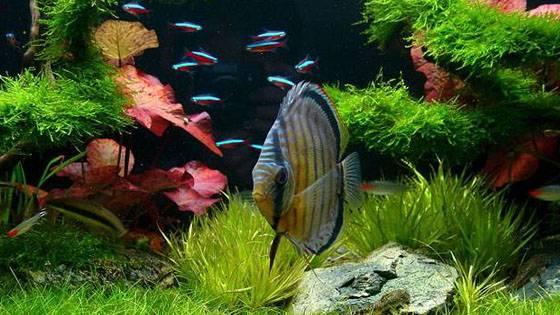 Дизайн аквариумов фото 9
