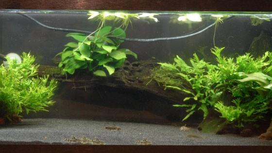 Дизайн аквариумов фото 10