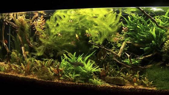 Дизайн аквариумов фото 3