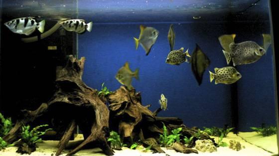 Дизайн аквариумов на фото