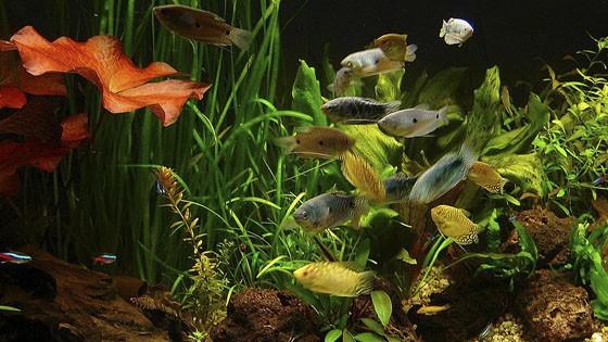 Дизайн аквариумов фото 6