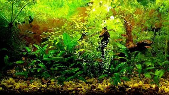 Дизайн аквариумов фото 7