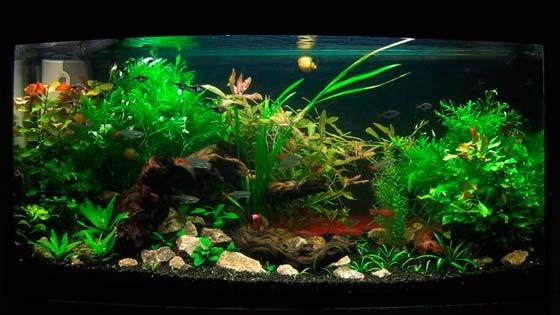 Дизайн аквариума Фото 9