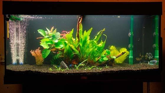Дизайн аквариума Фото 11