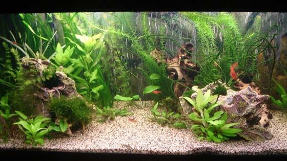 Дизайн аквариума Фото 12