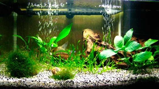 Дизайн аквариума Фото 13