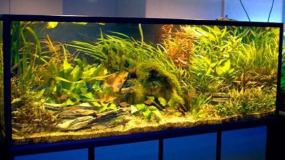 Дизайн аквариума Фото 14