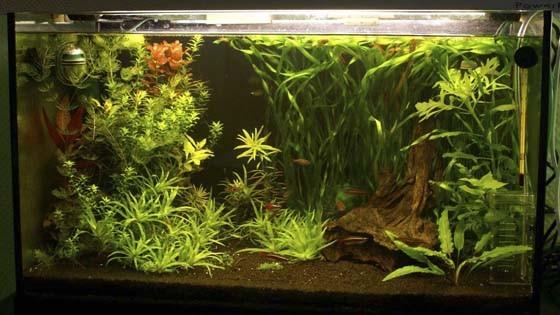 Дизайн аквариума Фото 2