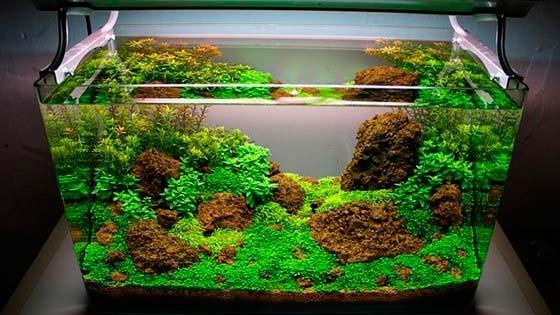 Дизайн аквариума Фото 3