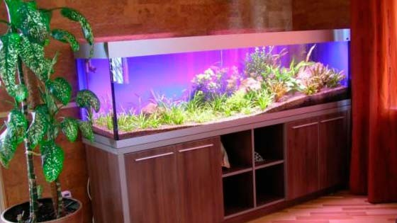 Дизайн аквариума Фото 5