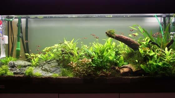 Дизайн аквариума Фото 6