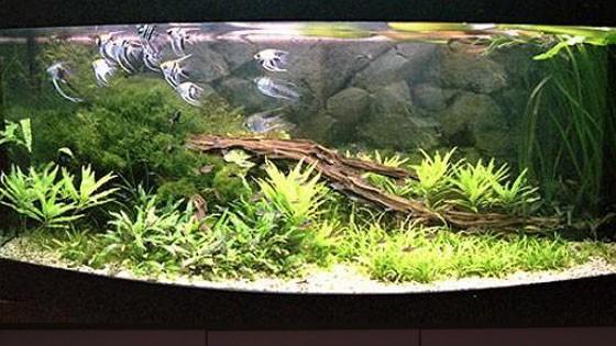 Дизайн аквариума Фото 7