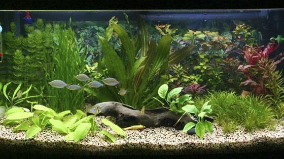 Дизайн аквариума Фото 8