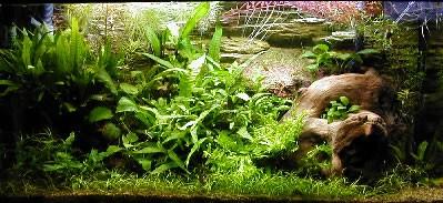 Как выбрать и оформить аквариум