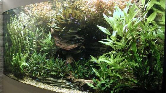 Оформление аквариума фото 3