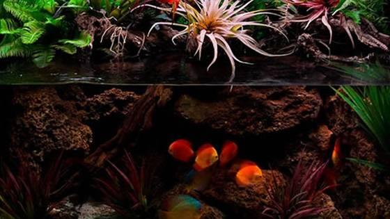 Оформление аквариума фото 4