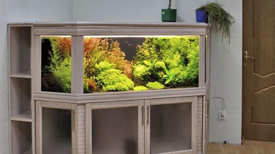 Оформление аквариума фото 5