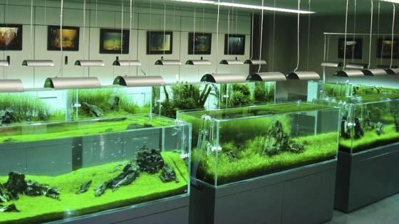 Оформление аквариума фото 6