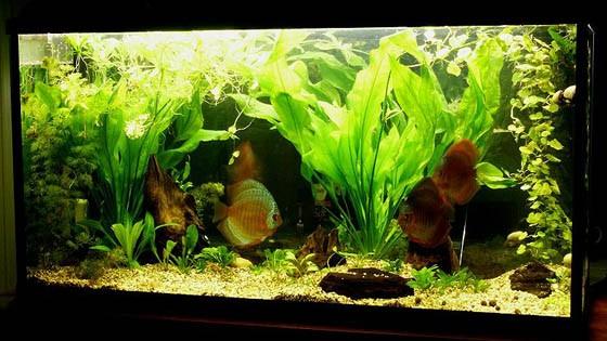 Оформление аквариума фото 7