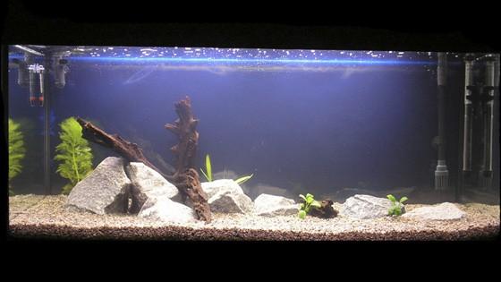 Оформление аквариума фото 8