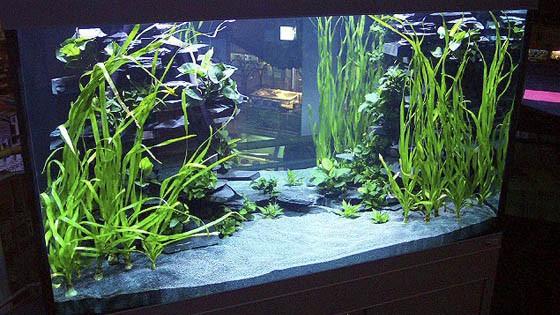 Оформление аквариума фото 9