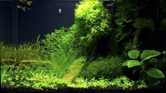 Оформление аквариума фото 10
