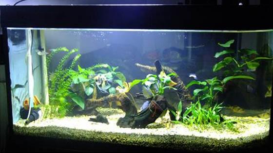 Оформление аквариума фото 11