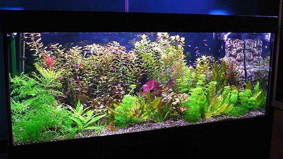 Оформление аквариума фото 13