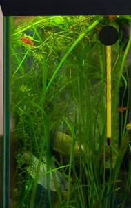 temperatura-v-akvariume
