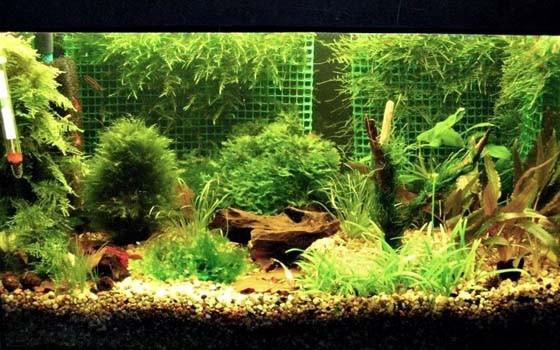 Декоративные аквариумные растения