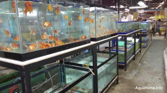 Аквариумные рыбки в зоомагазине Таиланда