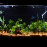 Дизайн аквариума. Фото