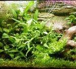 Как выбрать и оформить аквариум. Основные моменты
