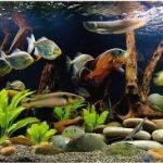 Дизайн аквариума. Видео галерея №1