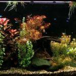 Подводный мир аквариума. Фильм второй