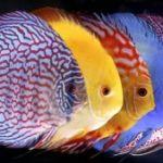 Дизайн аквариума. Видео галерея №6