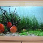Дизайн аквариума