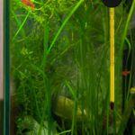 Завышенная и заниженная температура в аквариуме