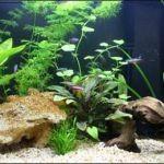 Об аквариумных рыбках