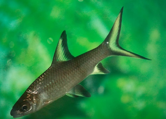 Фото - акулий балу