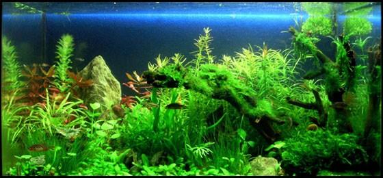 aqua_fishes