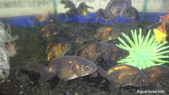 thailand-aquahome