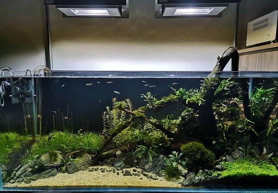 Фото правильно запущенного аквариума