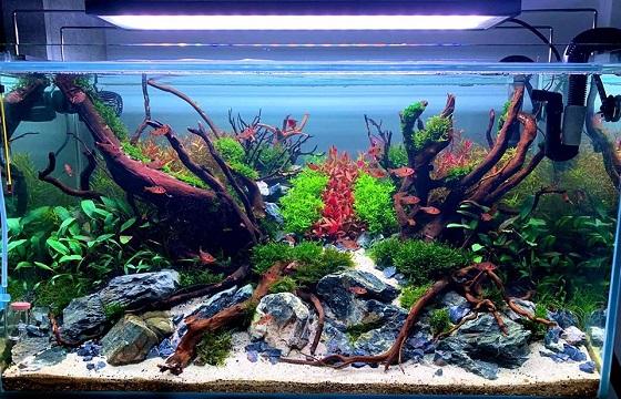 Фото аквариума номер 2