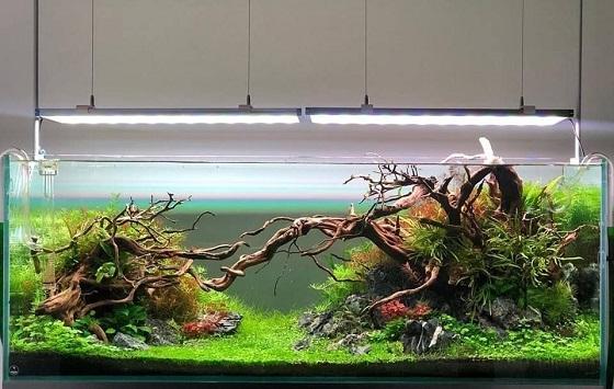 Фотография аквариума номер 3