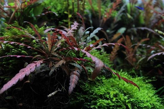 Польза аквариумных растений