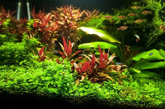 Виды аквариумных растений