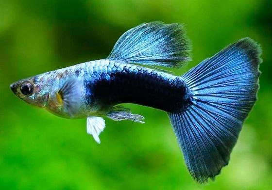 Рыбки для первого аквариума