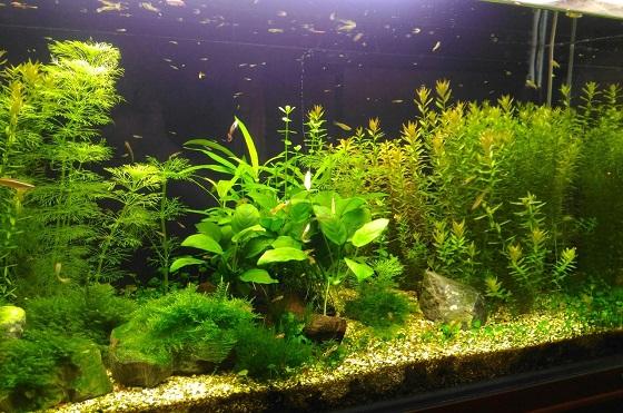 Заселение аквариума
